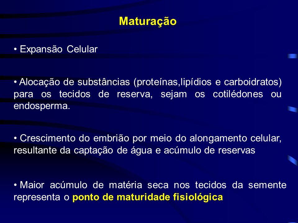 Maturação Maior acúmulo de matéria seca nos tecidos da semente representa o ponto de maturidade fisiológica Expansão Celular Alocação de substâncias (