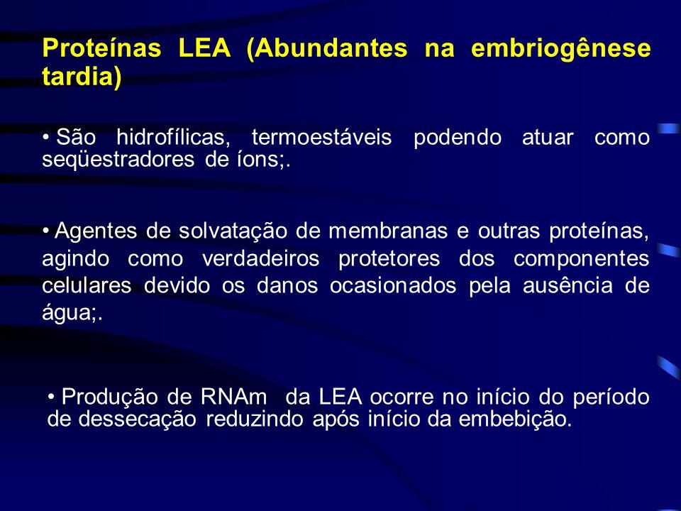 Proteínas LEA (Abundantes na embriogênese tardia) São hidrofílicas, termoestáveis podendo atuar como seqüestradores de íons;. Agentes de solvatação de