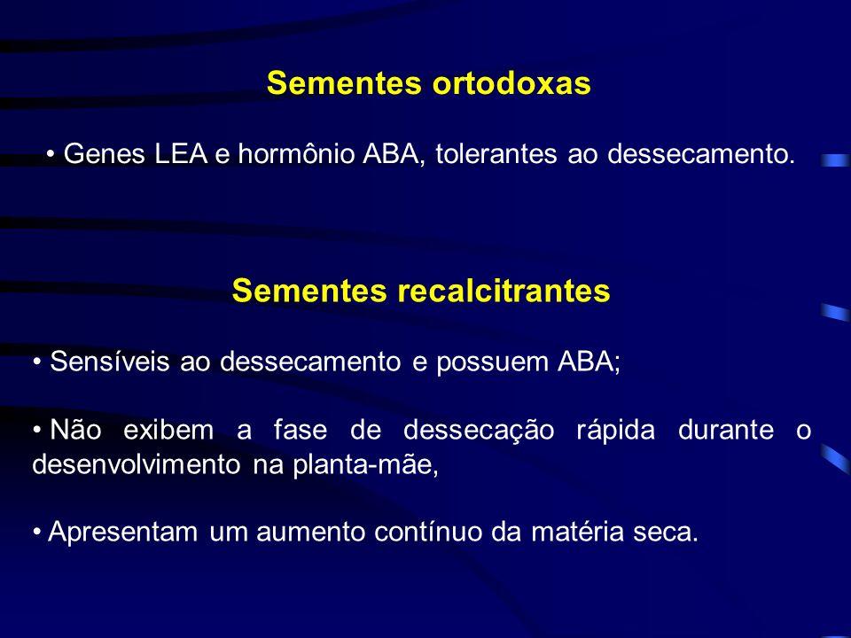 Sementes ortodoxas Genes LEA e hormônio ABA, tolerantes ao dessecamento. Sementes recalcitrantes Sensíveis ao dessecamento e possuem ABA; Não exibem a