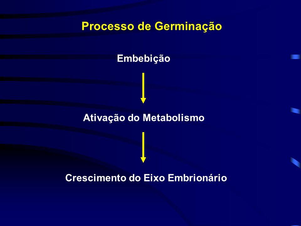 Processo de Germinação Embebição Ativação do Metabolismo Crescimento do Eixo Embrionário