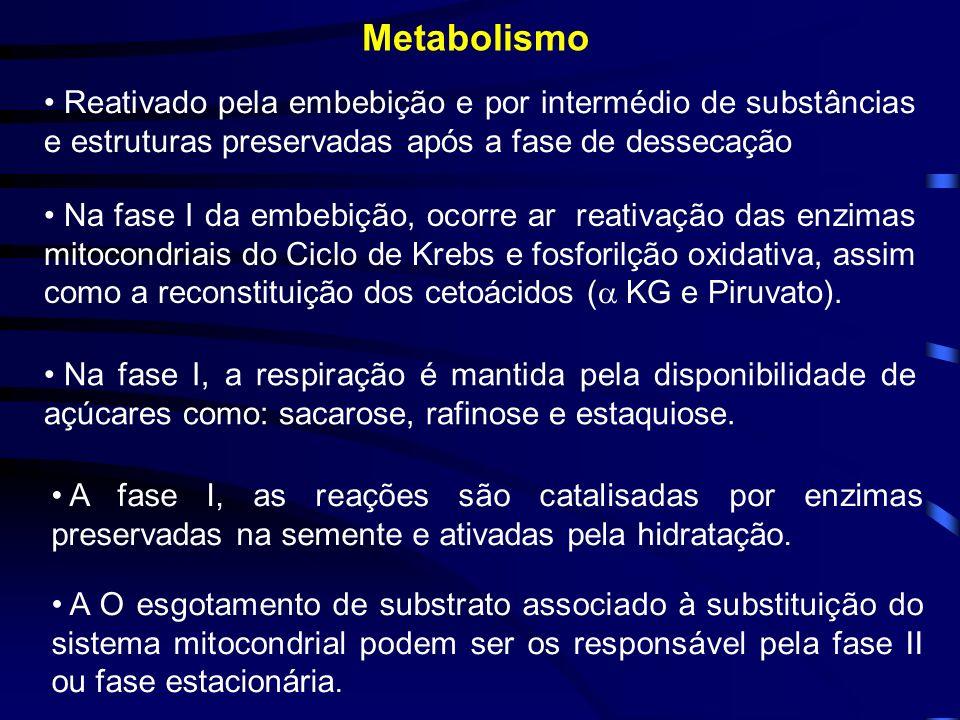 Metabolismo Reativado pela embebição e por intermédio de substâncias e estruturas preservadas após a fase de dessecação Na fase I da embebição, ocorre
