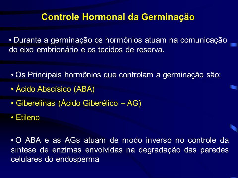 Controle Hormonal da Germinação Durante a germinação os hormônios atuam na comunicação do eixo embrionário e os tecidos de reserva. Os Principais horm