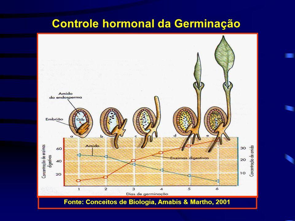 Controle hormonal da Germinação Fonte: Conceitos de Biologia, Amabis & Martho, 2001