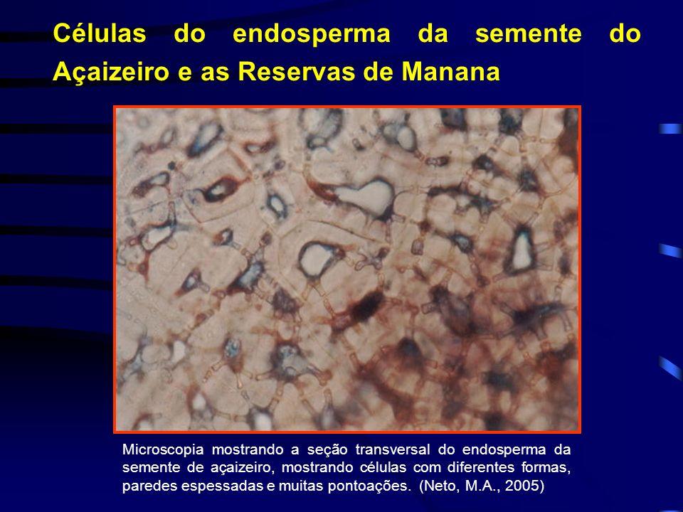 B Células do endosperma da semente do Açaizeiro e as Reservas de Manana Microscopia mostrando a seção transversal do endosperma da semente de açaizeir