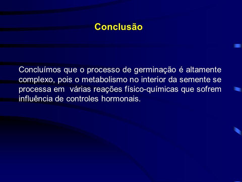 Conclusão Concluímos que o processo de germinação é altamente complexo, pois o metabolismo no interior da semente se processa em várias reações físico