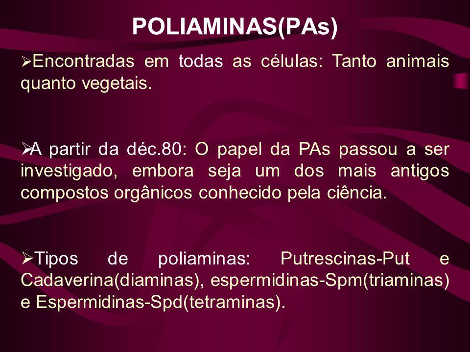 POLIAMINAS(PAs) Encontradas em todas as células: Tanto animais quanto vegetais. A partir da déc.80: O papel da PAs passou a ser investigado, embora se