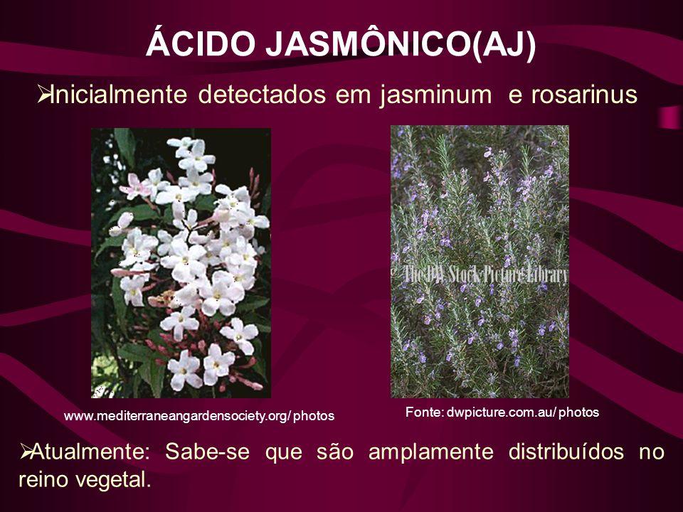 ÁCIDO JASMÔNICO(AJ) Fonte: dwpicture.com.au/ photos www.mediterraneangardensociety.org/ photos Inicialmente detectados em jasminum e rosarinus Atualme