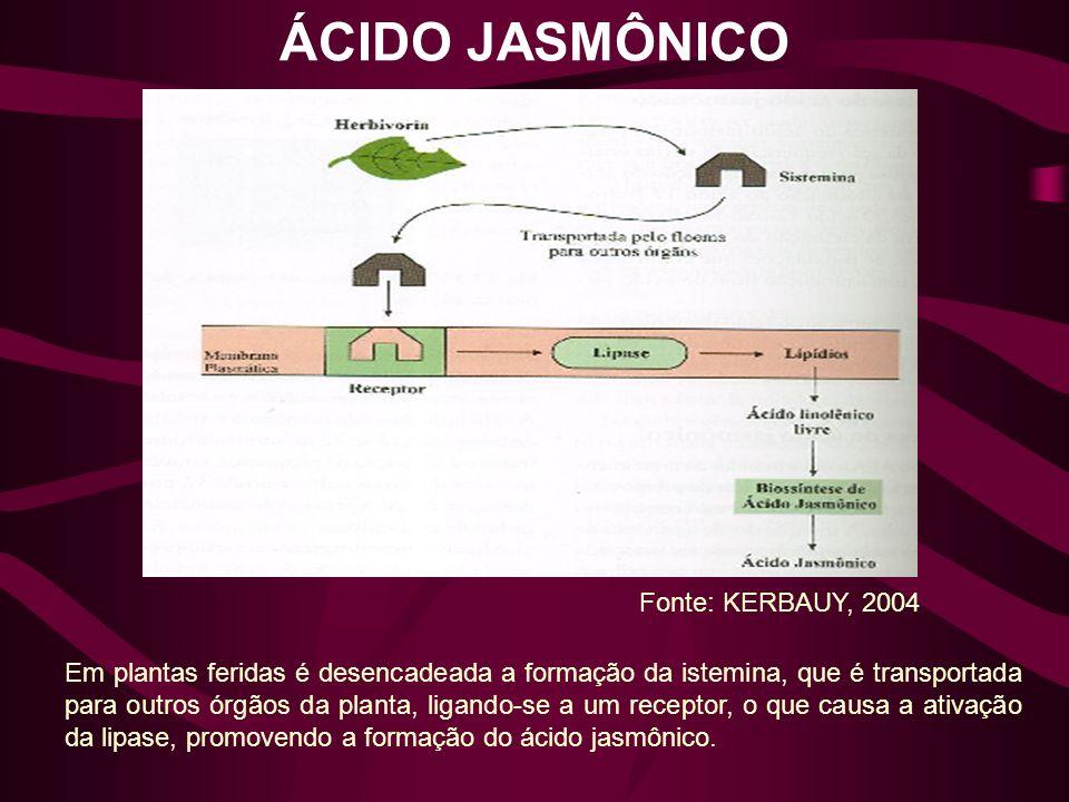 ÁCIDO JASMÔNICO Em plantas feridas é desencadeada a formação da istemina, que é transportada para outros órgãos da planta, ligando-se a um receptor, o