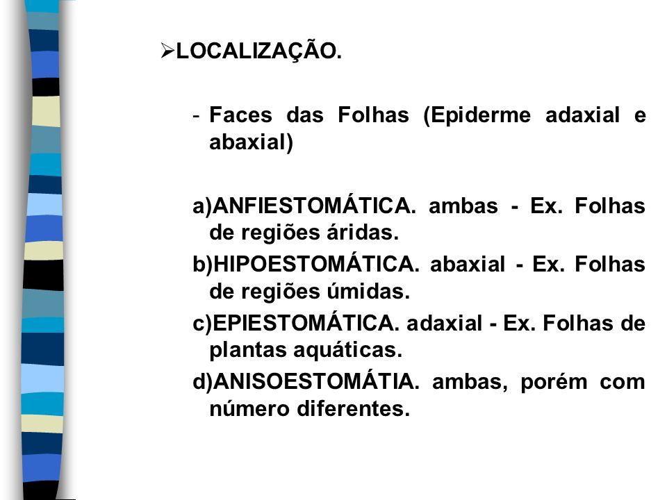 LOCALIZAÇÃO.-Faces das Folhas (Epiderme adaxial e abaxial) a)ANFIESTOMÁTICA.