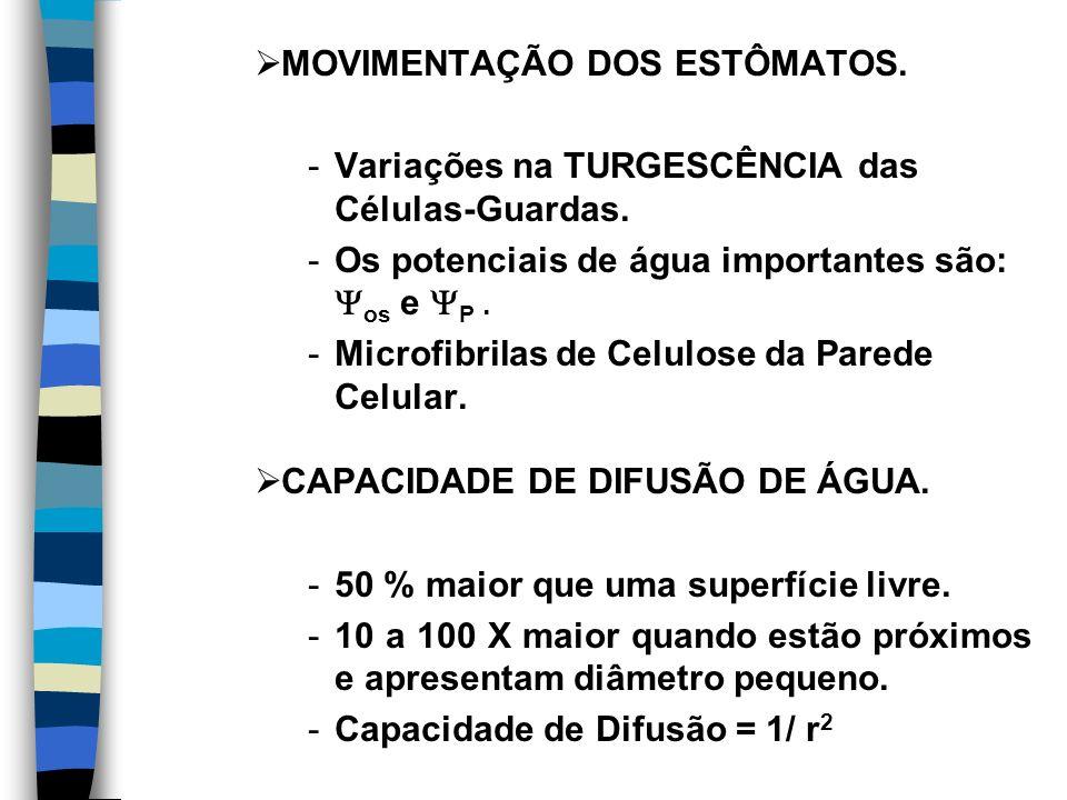 MOVIMENTAÇÃO DOS ESTÔMATOS.-Variações na TURGESCÊNCIA das Células-Guardas.