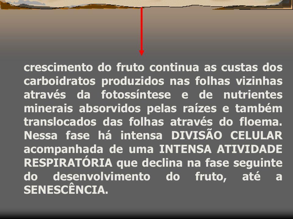 D) FRUTOS: Polinização crescimento do tubo polínico ovário óvulo Fertilização (fusão do núcleo masculino com o feminino) aumenta o teor de AIA