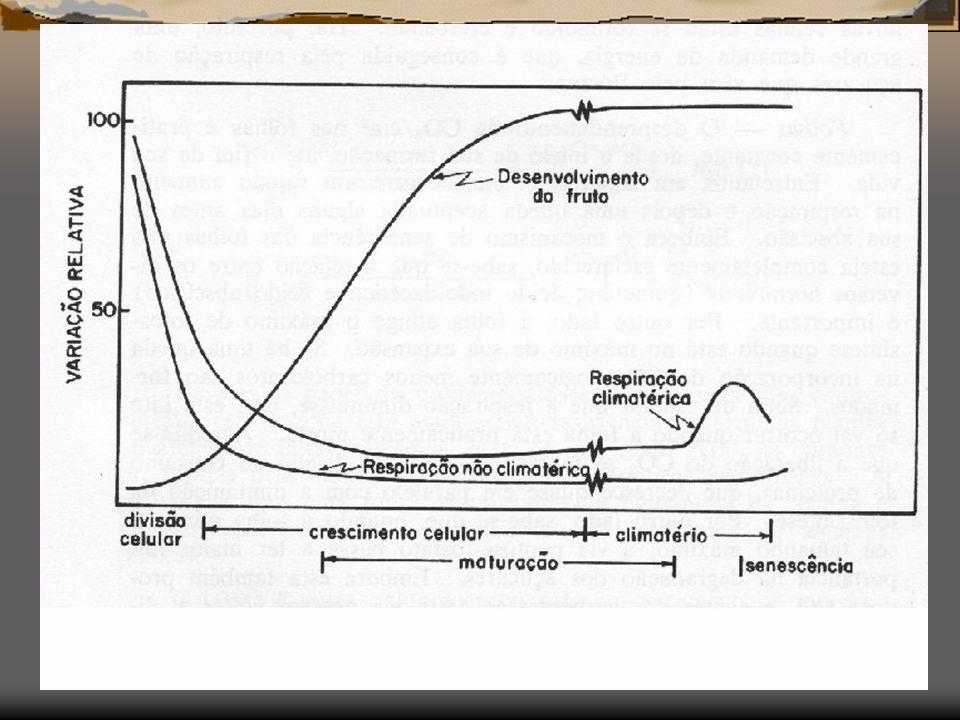 CERTOS FRUTOS: No final da fase de maturação, apresentam um aumento na RESPIRAÇÃO e depois um decréscimo.