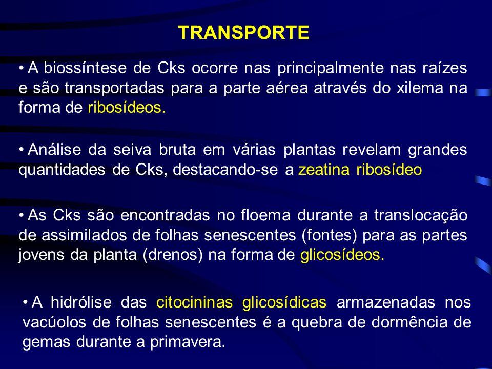 HIDRÓLISE DAS CITOCININAS Fonte: Fisiologia Vegetal, Kerbauy, G., 2004