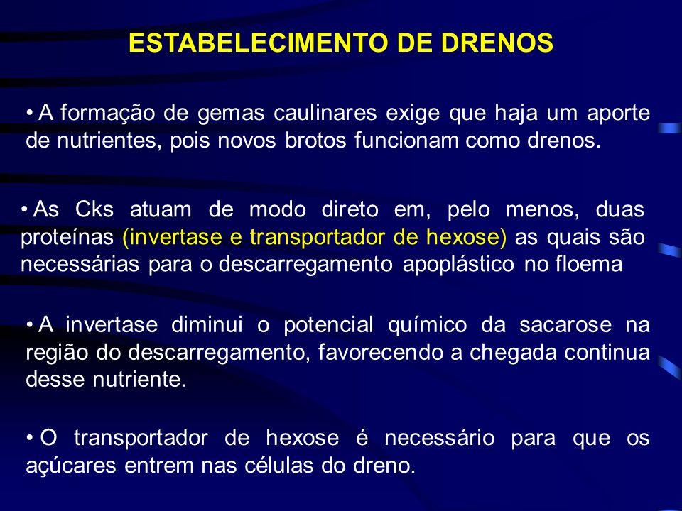 DESENVOLVIMENTO DE GEMAS NO MUSGO Funaria E EM ORQUÍDEAS CULTIVADAS IN VITRO Fonte: Fisiologia Vegetal, Taiz & Zeiger, 2004 & Fisiologia Vegetal, Kerb
