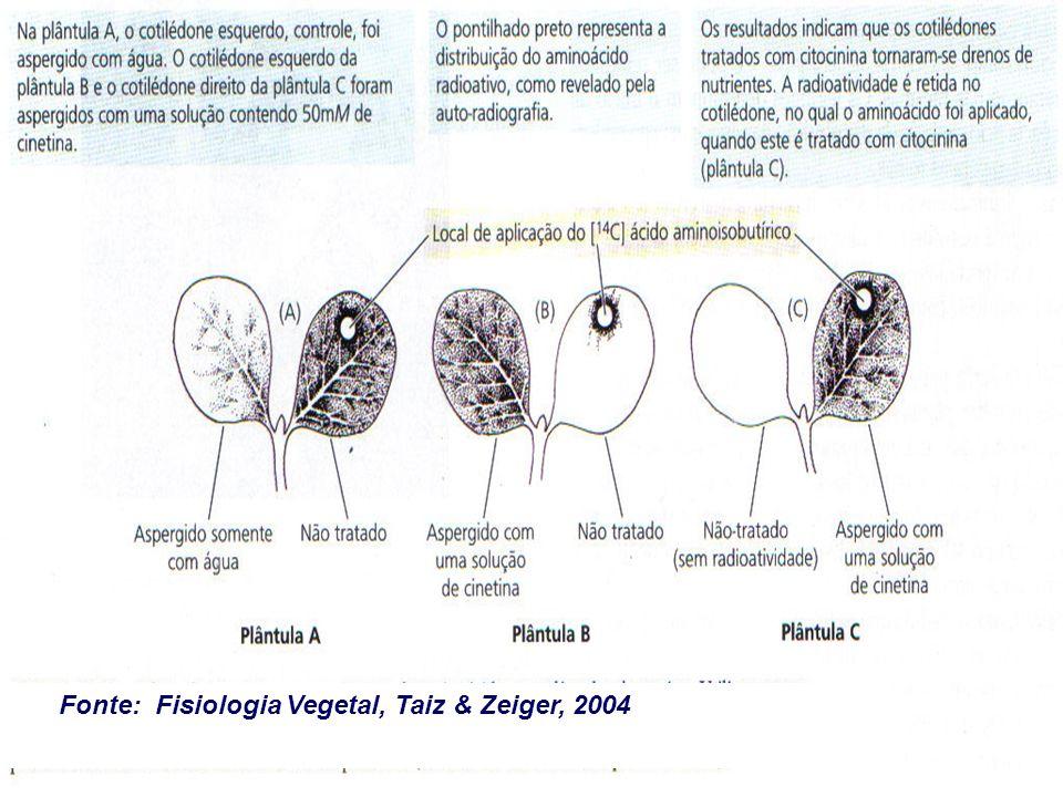 Fonte: Fisiologia Vegetal, Taiz & Zeiger, 2004