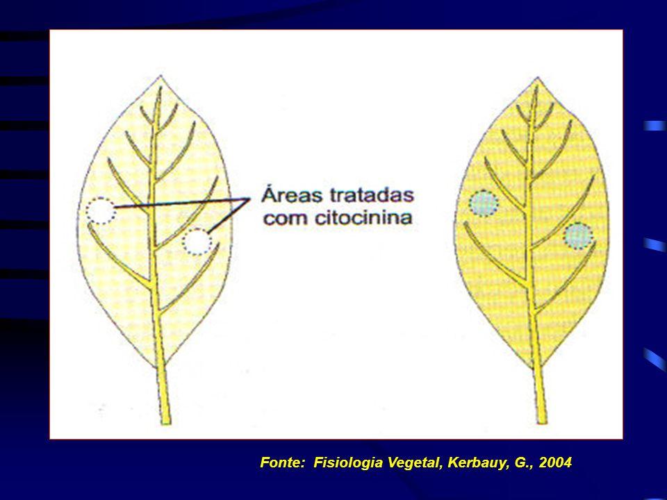 RETARDAMENTO DA SENESCÊNCIA FOLIAR Fonte: Fisiologia Vegetal, Kerbauy, G., 2004