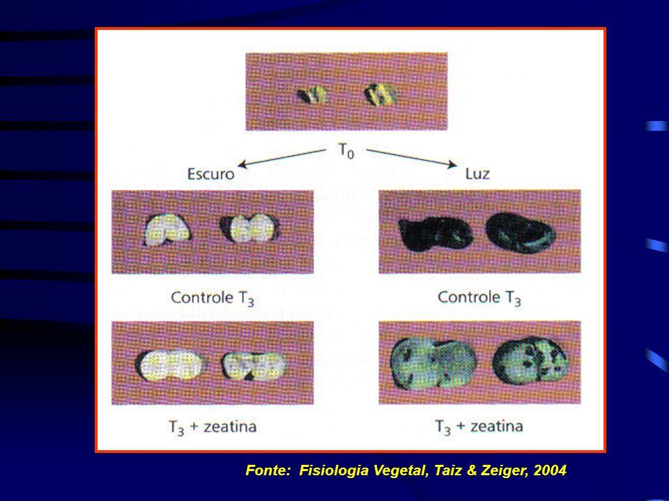 Fonte: Biologia das Células, Amabis & Martho, 2001 ORIGEM DOS CLOROPLASTOS