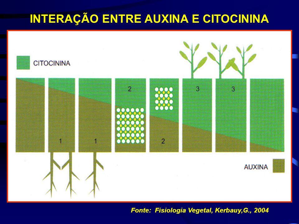 EFEITOS DAS CITOCININAS Interação outras classes hormonais ( auxinas) Interação entre vegetais e meio ambiente Luz Nutrientes Minerais Temperatura Int