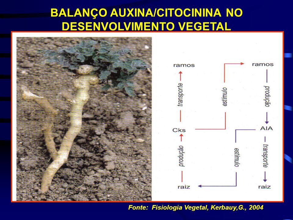 Fonte: Fisiologia Vegetal, Kerbauy,G., 2004 INTERAÇÃO ENTRE AUXINA E CITOCININA