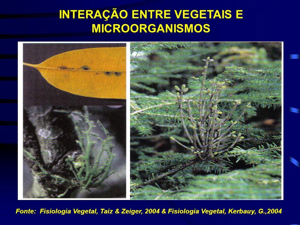 Fonte: Fisiologia Vegetal, Taiz & Zeiger, 2004 REGULAÇÃO DO CRESCIMENTO E DA FORMAÇÃO DE ÓRGÃOS EM CALOS DE TABACO