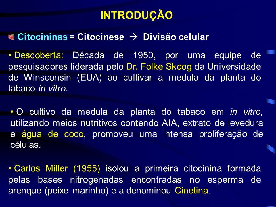 INTRODUÇÃO Citocininas = Citocinese Divisão celular Descoberta: Década de 1950, por uma equipe de pesquisadores liderada pelo Dr.