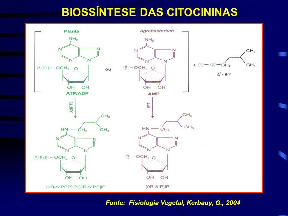 BIOSSÍNTESE DAS CITOCININAS Fonte: Fisiologia Vegetal, Kerbauy, G., 2004