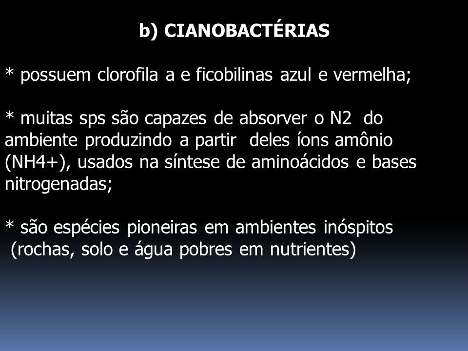 b) CIANOBACTÉRIAS * possuem clorofila a e ficobilinas azul e vermelha; * muitas sps são capazes de absorver o N2 do ambiente produzindo a partir deles