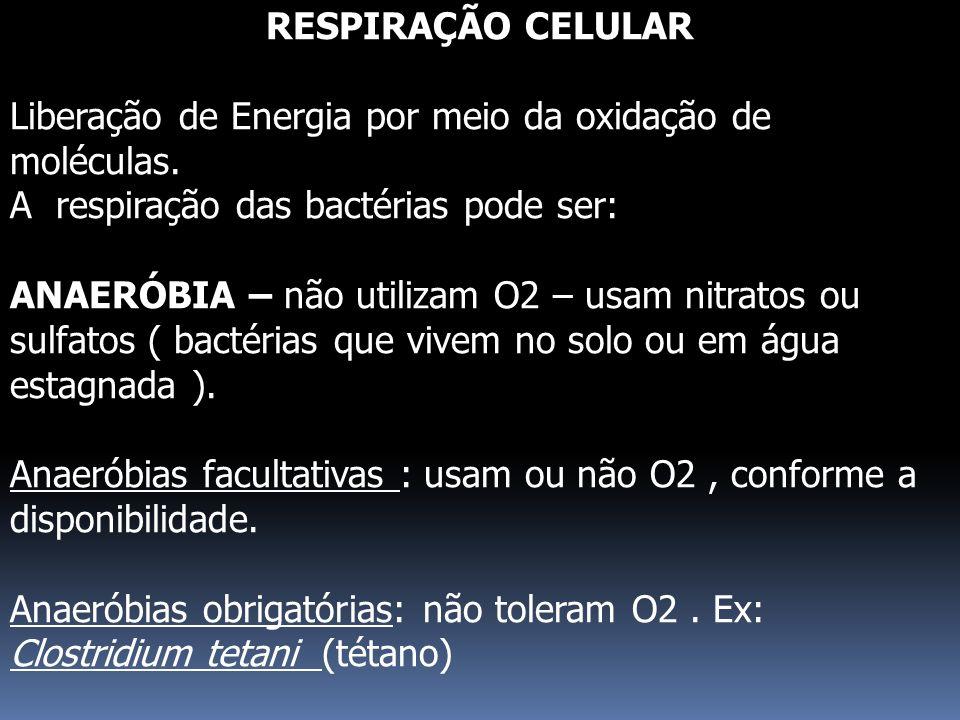 RESPIRAÇÃO CELULAR Liberação de Energia por meio da oxidação de moléculas. A respiração das bactérias pode ser: ANAERÓBIA – não utilizam O2 – usam nit