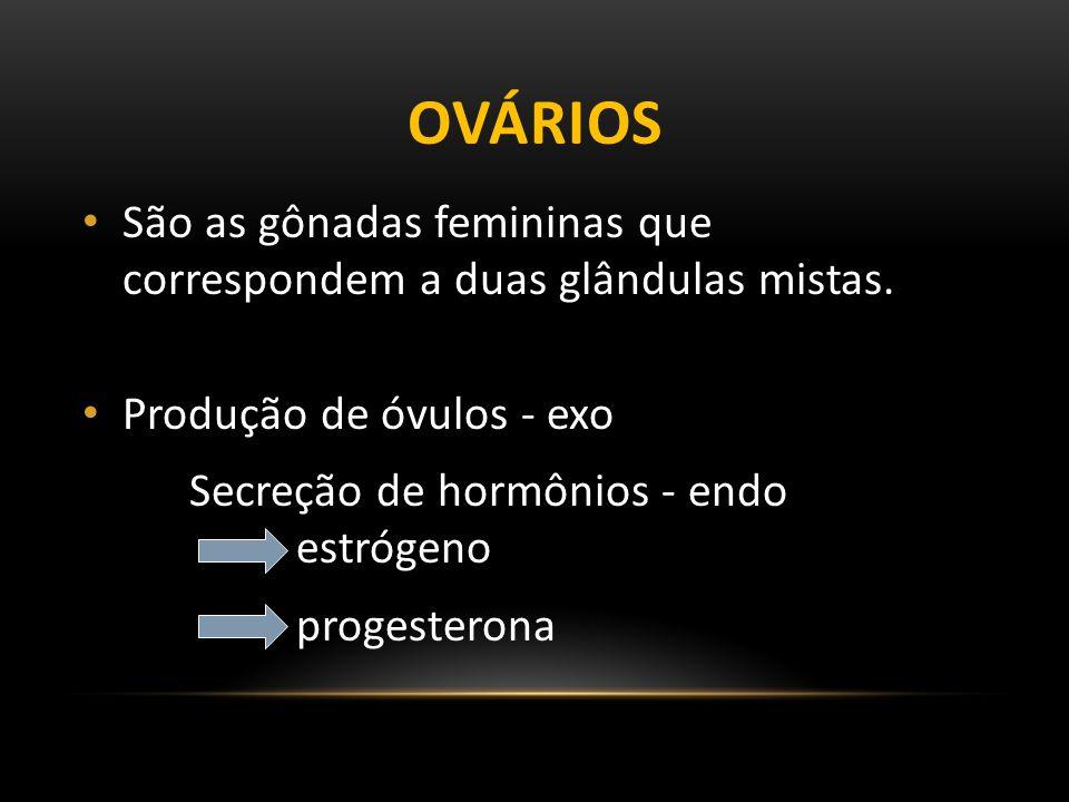 OVÁRIOS São as gônadas femininas que correspondem a duas glândulas mistas.