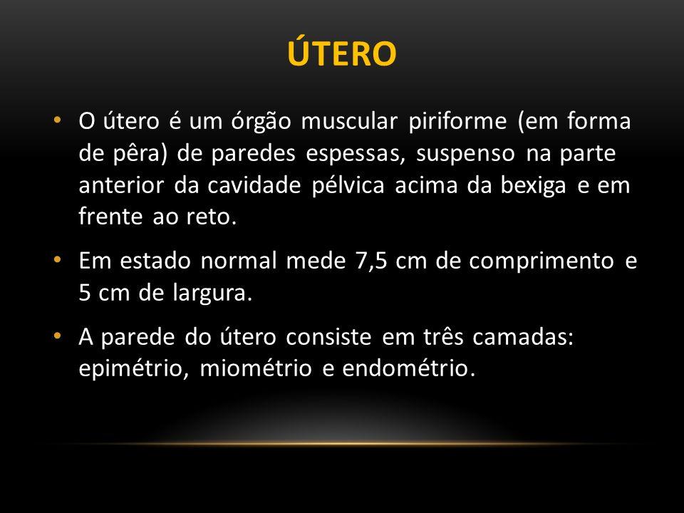 ÚTERO O útero é um órgão muscular piriforme (em forma de pêra) de paredes espessas, suspenso na parte anterior da cavidade pélvica acima da bexiga e em frente ao reto.
