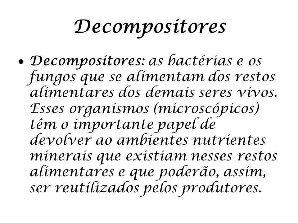 Decompositores Decompositores: as bactérias e os fungos que se alimentam dos restos alimentares dos demais seres vivos. Esses organismos (microscópico