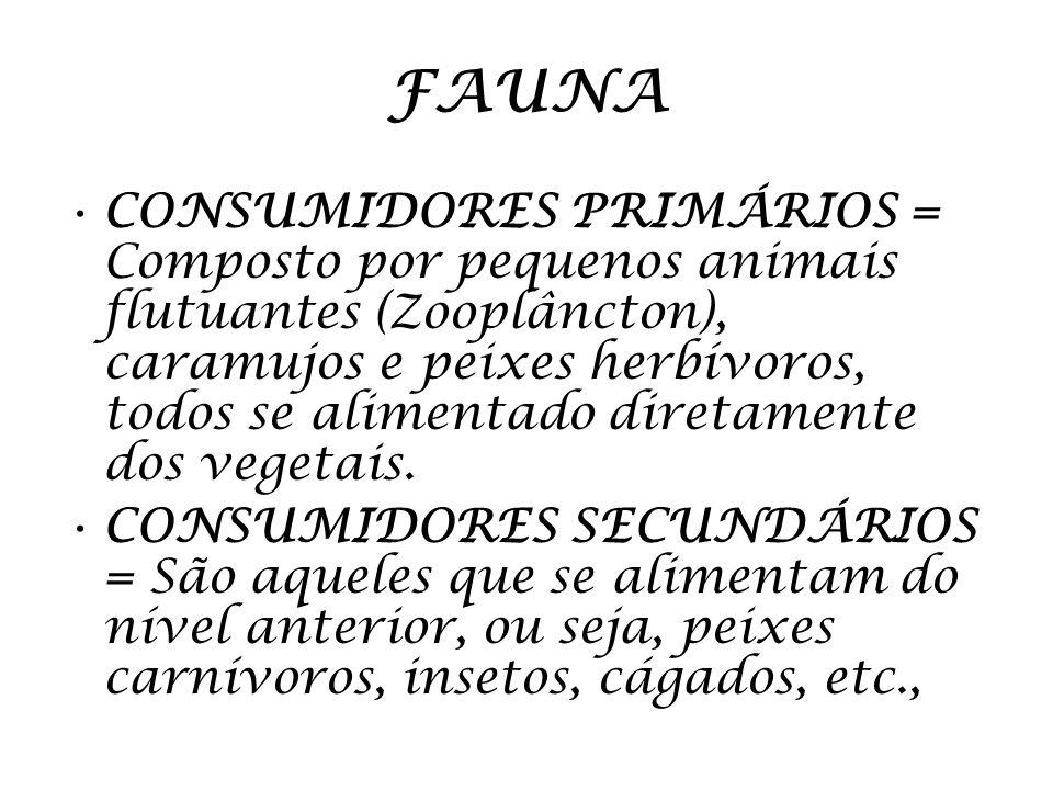 FAUNA CONSUMIDORES PRIMÁRIOS = Composto por pequenos animais flutuantes (Zooplâncton), caramujos e peixes herbívoros, todos se alimentado diretamente