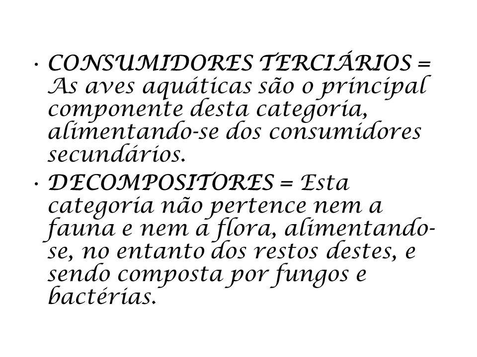 CONSUMIDORES TERCIÁRIOS = As aves aquáticas são o principal componente desta categoria, alimentando-se dos consumidores secundários. DECOMPOSITORES =