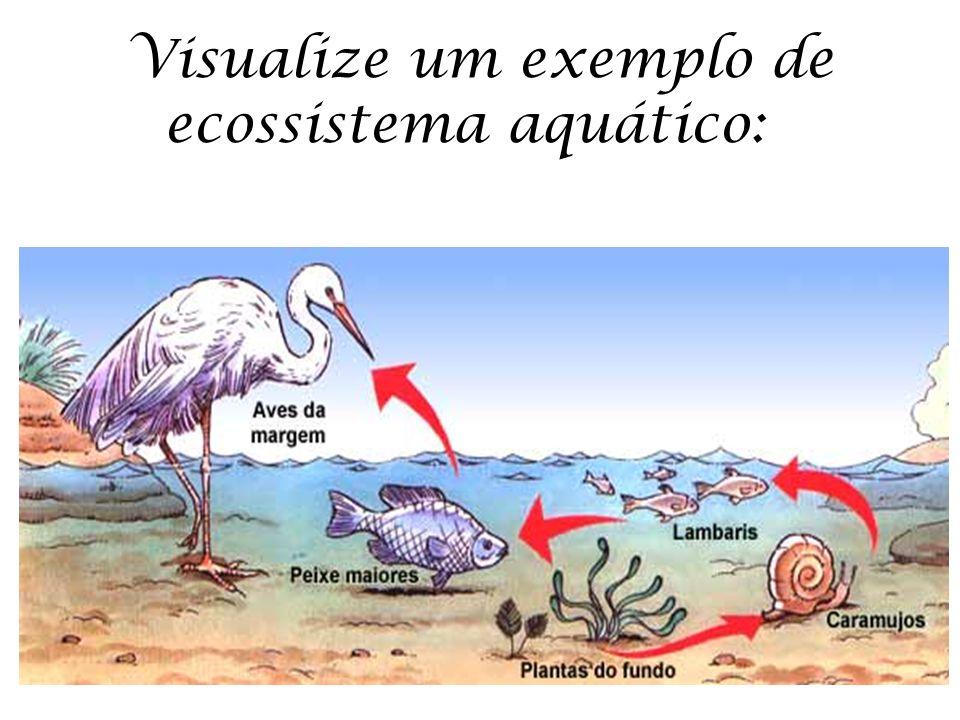 Visualize um exemplo de ecossistema aquático: