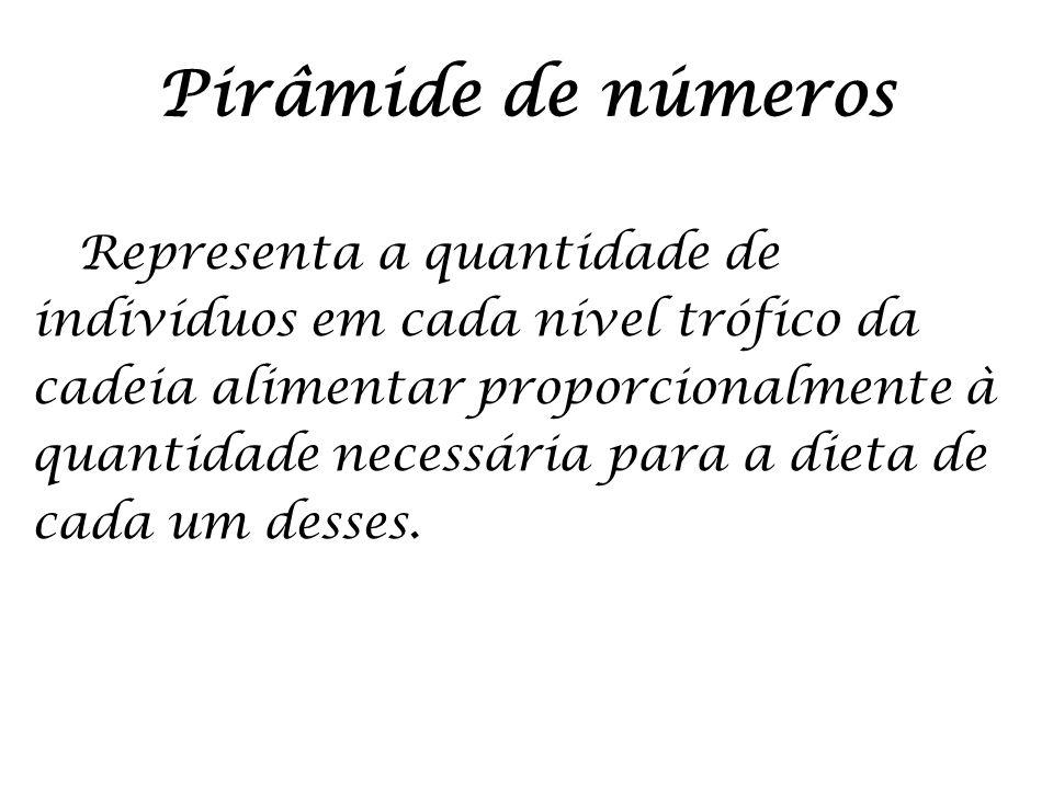 Pirâmide de números Representa a quantidade de indivíduos em cada nível trófico da cadeia alimentar proporcionalmente à quantidade necessária para a d