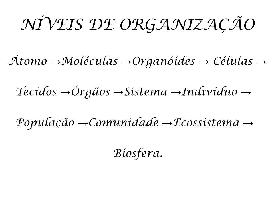 NÍVEIS DE ORGANIZAÇÃO Átomo Moléculas Organóides Células Tecidos Órgãos Sistema Indivíduo População Comunidade Ecossistema Biosfera.