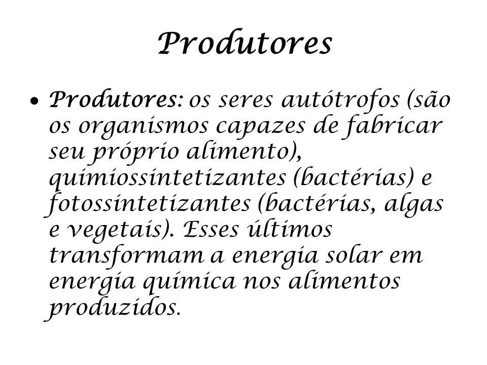 Produtores Produtores: os seres autótrofos (são os organismos capazes de fabricar seu próprio alimento), quimiossintetizantes (bactérias) e fotossinte