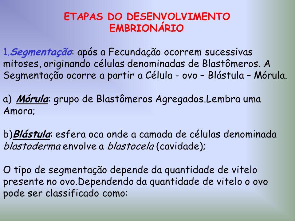 ETAPAS DO DESENVOLVIMENTO EMBRIONÁRIO 1.Segmentação: após a Fecundação ocorrem sucessivas mitoses, originando células denominadas de Blastômeros. A Se