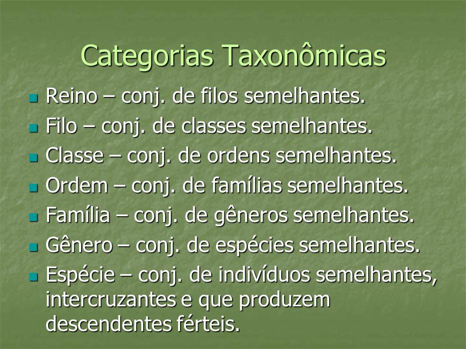 Categorias Taxonômicas Reino – conj. de filos semelhantes. Reino – conj. de filos semelhantes. Filo – conj. de classes semelhantes. Filo – conj. de cl