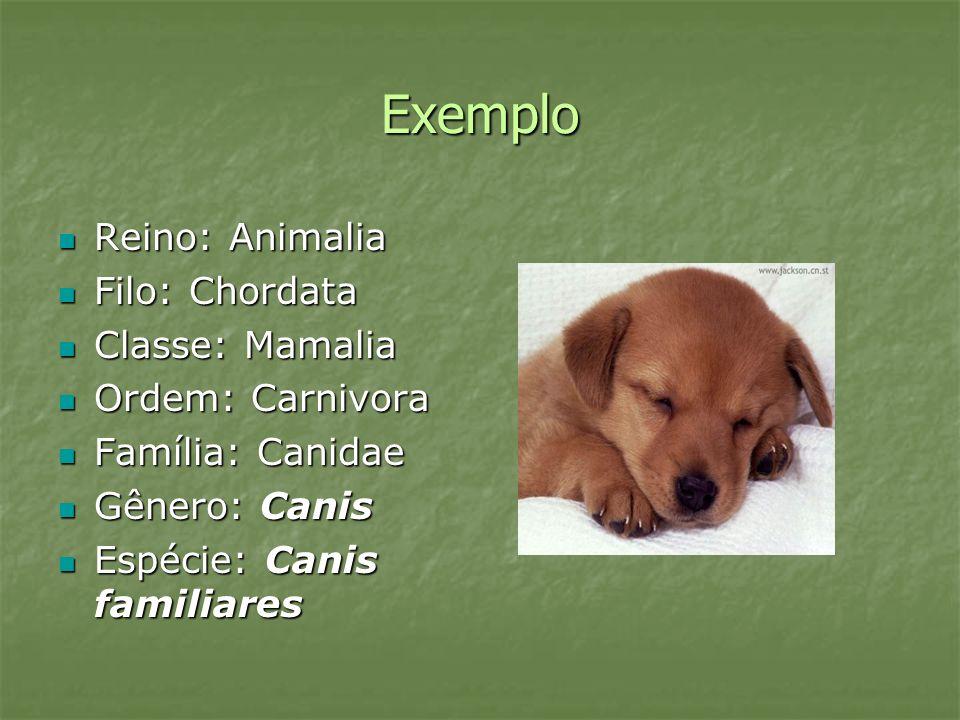 Exemplo Reino: Animalia Reino: Animalia Filo: Chordata Filo: Chordata Classe: Mamalia Classe: Mamalia Ordem: Carnivora Ordem: Carnivora Família: Canid