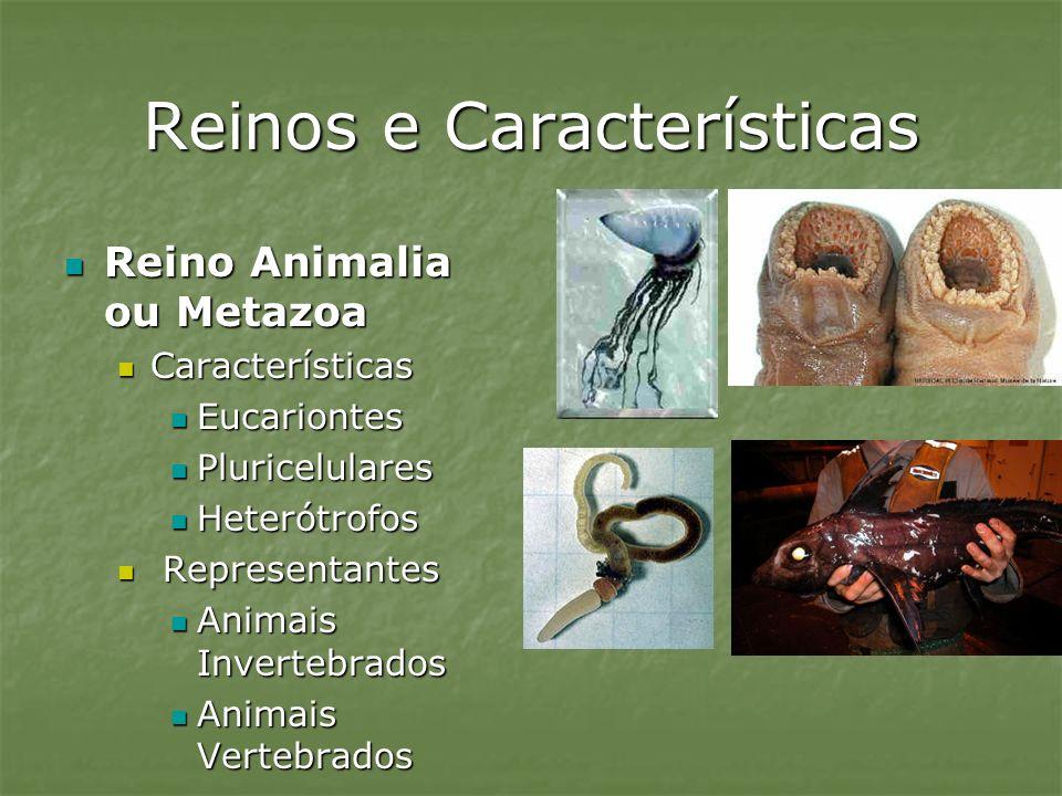 Reinos e Características Reino Animalia ou Metazoa Reino Animalia ou Metazoa Características Características Eucariontes Eucariontes Pluricelulares Pl