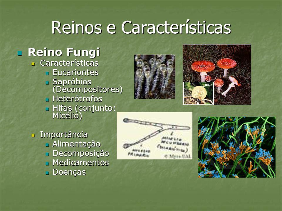 Reinos e Características Reino Fungi Reino Fungi Características Características Eucariontes Eucariontes Sapróbios (Decompositores) Sapróbios (Decompo