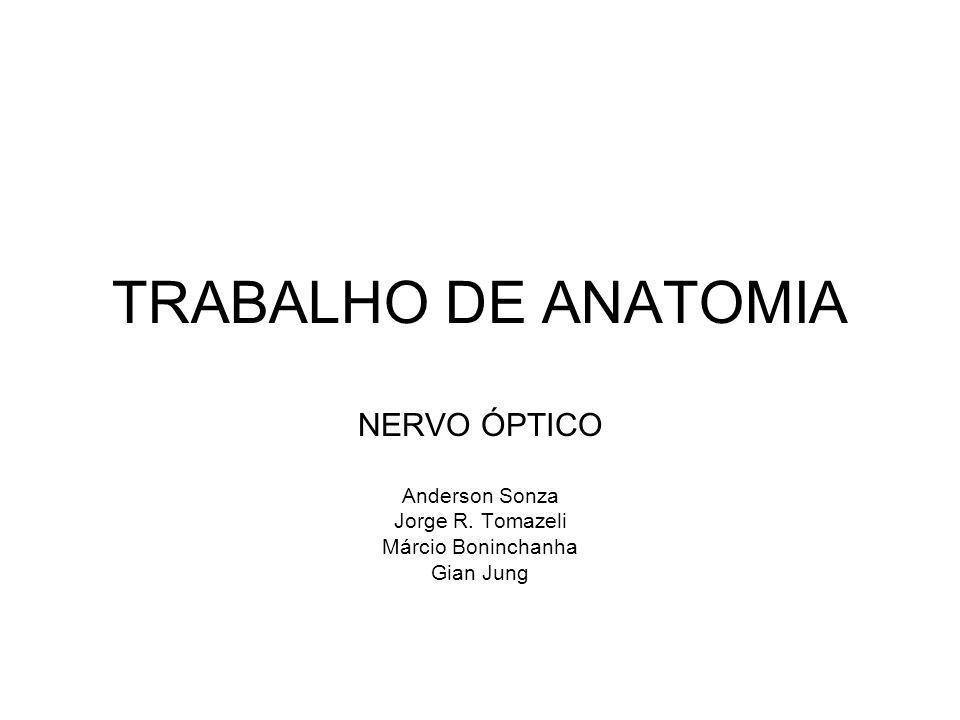 TRABALHO DE ANATOMIA NERVO ÓPTICO Anderson Sonza Jorge R. Tomazeli Márcio Boninchanha Gian Jung