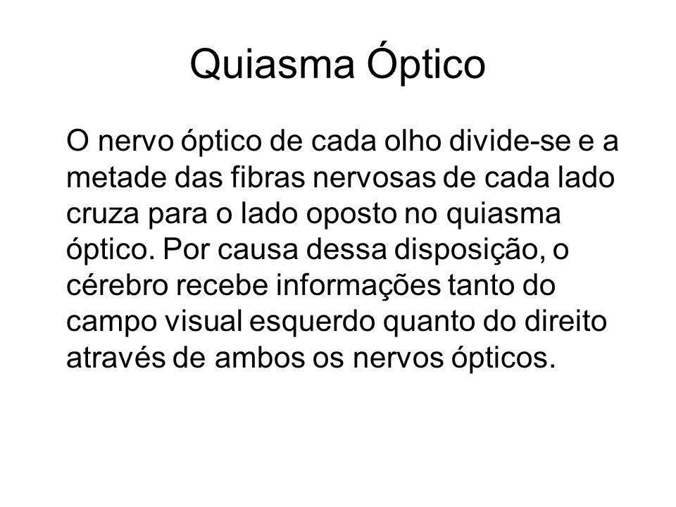 Quiasma Óptico O nervo óptico de cada olho divide-se e a metade das fibras nervosas de cada lado cruza para o lado oposto no quiasma óptico. Por causa