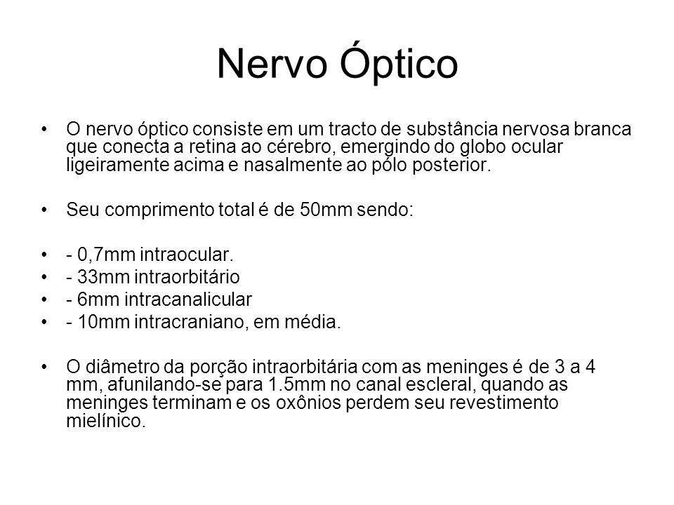 Nervo Óptico O nervo óptico consiste em um tracto de substância nervosa branca que conecta a retina ao cérebro, emergindo do globo ocular ligeiramente