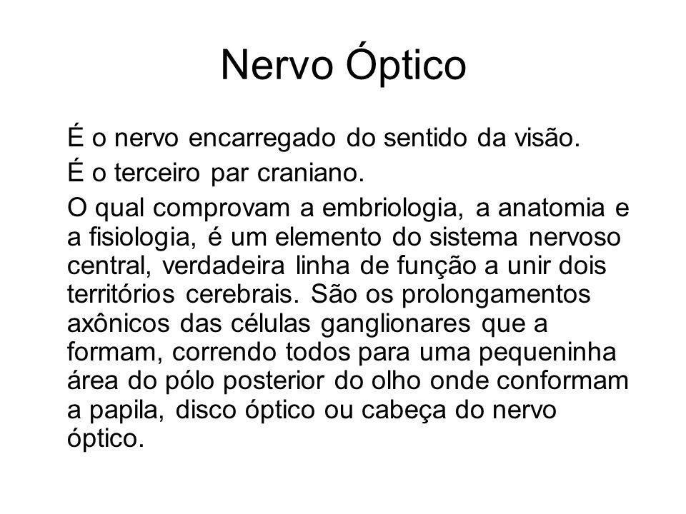 Nervo Óptico É o nervo encarregado do sentido da visão. É o terceiro par craniano. O qual comprovam a embriologia, a anatomia e a fisiologia, é um ele