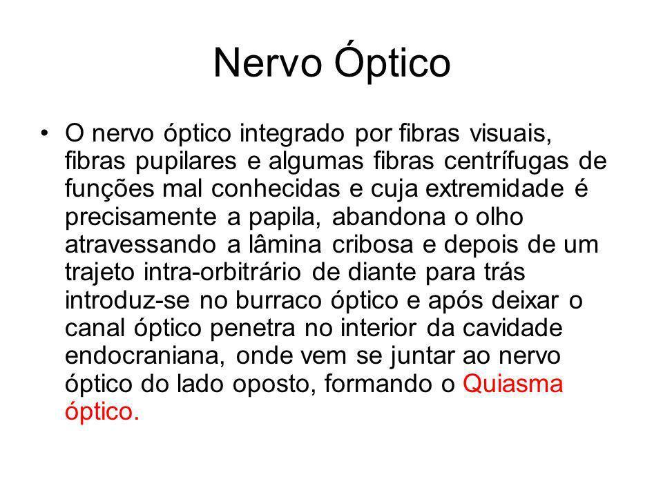 Nervo Óptico O nervo óptico integrado por fibras visuais, fibras pupilares e algumas fibras centrífugas de funções mal conhecidas e cuja extremidade é