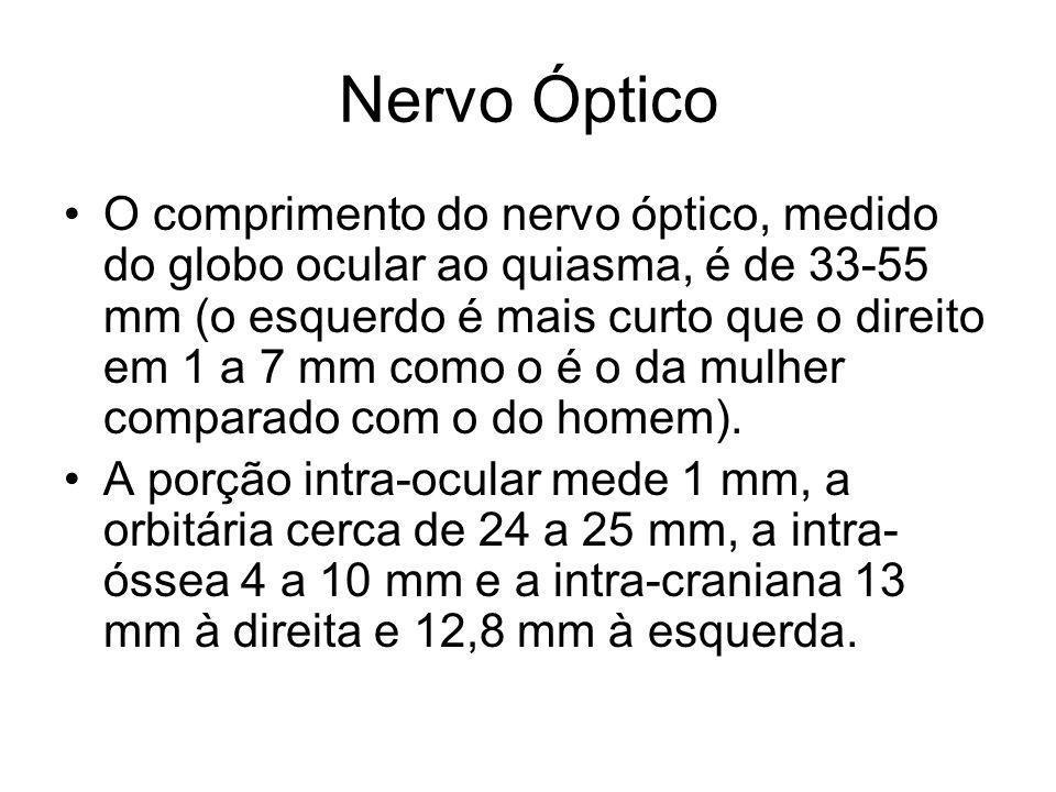 Nervo Óptico O comprimento do nervo óptico, medido do globo ocular ao quiasma, é de 33-55 mm (o esquerdo é mais curto que o direito em 1 a 7 mm como o