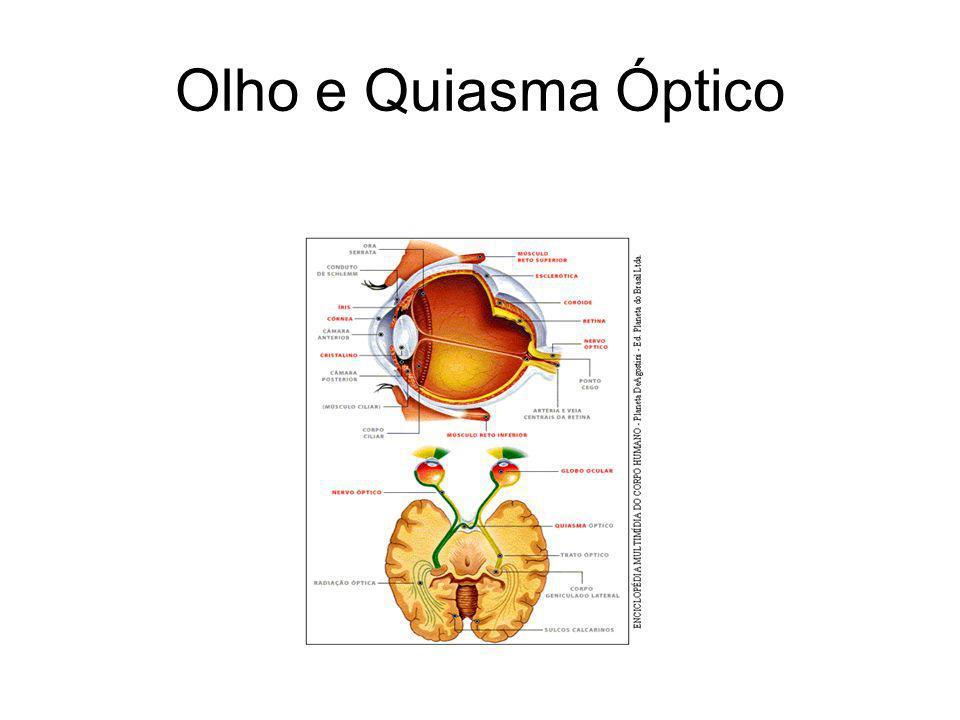 Olho e Quiasma Óptico