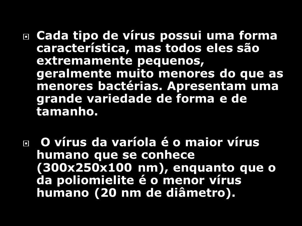 Cada tipo de vírus possui uma forma característica, mas todos eles são extremamente pequenos, geralmente muito menores do que as menores bactérias.